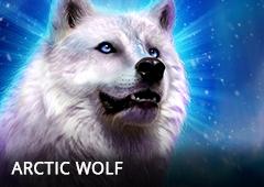 Arctic Wolf T1