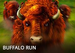 Buffalo Run T1