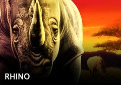 Rhino T1