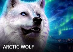Arctic Wolf T2